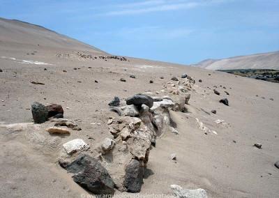 Muro de contención de piedras, para nivelar la pendiente del terreno, sitio Rosario 2, valle de Lluta